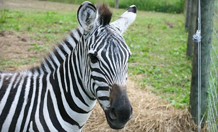 2 Park Admissions and a 45-Minute Private Reptile Show (a $66 value) - Boulder Ridge Wild Animal Park in Alto