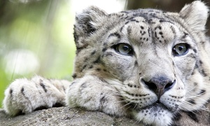 One-year Family Plus Or Family Deluxe Membership At Chattanooga Zoo (up To 39% Off)