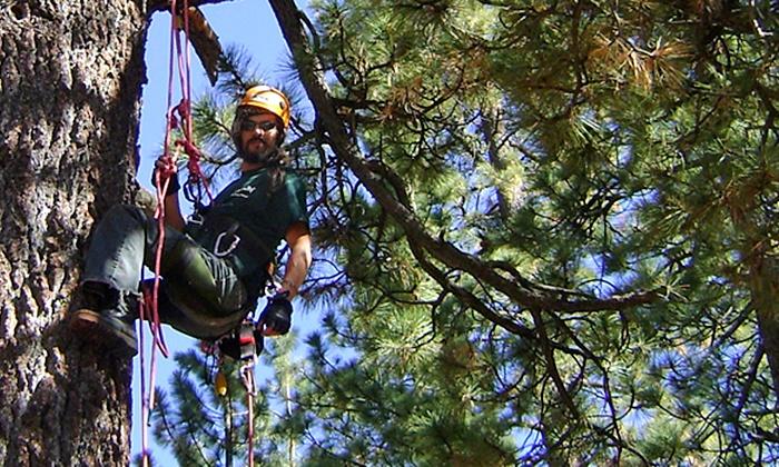 Action Tree Rope Climbing - Big Bear Lake: $65 for a Three-Hour Tree-Climbing Tour from Action Tree Rope Climbing ($101 Value)