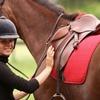 Half Off Horseback-Riding Lesson