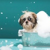 Up to 59% Off Self-Serve Dog Washing at Pet Supplies Plus