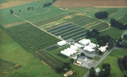 2 Adult Corn-Maze Admissions and 5 Gourds or Mini Pumpkins (a $19 value) - Grim's Greenhouse & Farm Market in Breinigsville