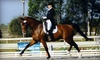 Annwyn Equestrian Center - Seffner: $50 for Four Private Horseback-Riding Lessons at Annwyn Equestrian Center in Seffner ($160 Value)