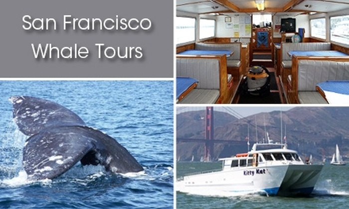 San Francisco Whale Tours  - Fisherman's Wharf: $35 for Grey Whale Migration Tour from San Francisco Whale Tours ($70 Value)