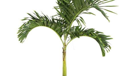 $200 for $400 Groupon — Real Palm Trees