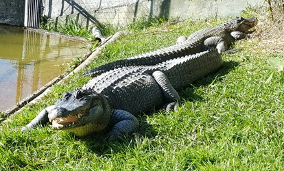 Reptile Park Entry for a Child ($5), Adult ($10) or Family of Four ($25), Ti Point (Up to $50 Value)