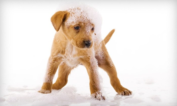 Squeaky Clean Car Wash - Raytown: $2 for a Self-Serve Dog Wash at Squeaky Clean Car Wash ($8 Value)