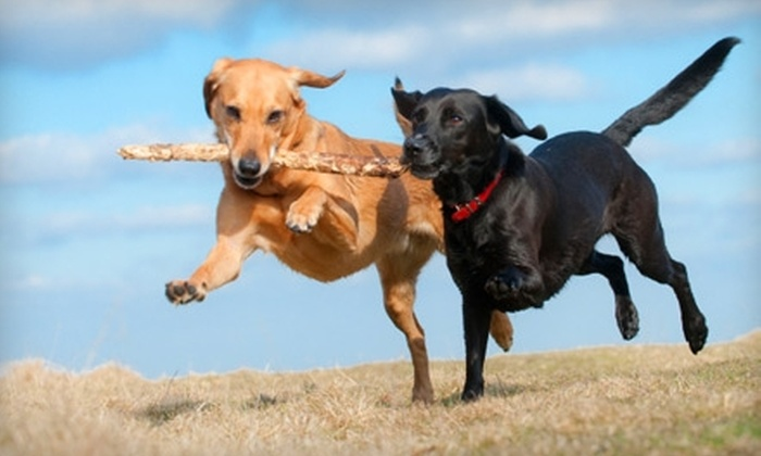 Dog-On Leash - SoMa: $57 for Five Days of Dog Walking from Dog-On Leash ($115 Value)