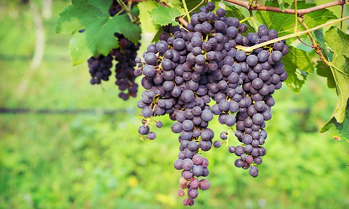 Grape Stompin' from Pledge 5 Foundation - Gainesville: Grape Stompin' Wine Event for One or Two from Pledge 5 Foundation on Saturday, August 25 (Up to 54% Off)
