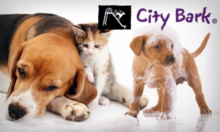 City Bark - Multiple Locations: $10 for $25 Worth of DIY Doggie Washing, Doggie Daycare, or Dog- and Cat-Boarding Services from City Bark