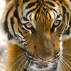 Up to 25% Off at Woodland Park Zoo