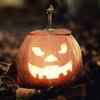 Halloween Maze and Pumpkin Carving