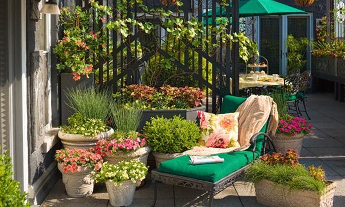 Jardinerie derly groupon for Jardinerie internet