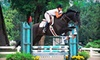 Equidream School of Horsemanship - Fremont: One, Three, or Five 30-Minute Horseback-Riding Lessons at Equidream School of Horsemanship in Grayslake (Up to 58% Off)