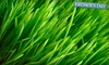 Pro Turf Lawn Service: Kansas City: $25 for a Lawn-Fertilization and Weed Treatment from Pro Turf Lawn & Tree Service (Up to $50 Value)