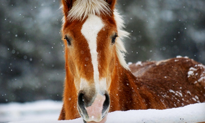 Sombrero Stables at Snow Mountain Ranch - Granby: One-Hour Guided Trail Ride with Hot Beverages for Two or Four at Sombrero Ranches in Granby (Up to 54% Off)