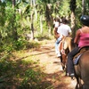 Up to 54% Off Horseback Rides in Lehigh Acres