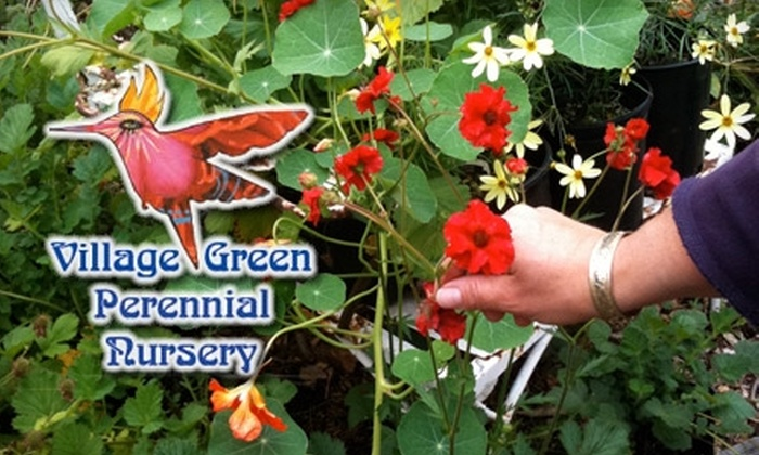 Village Green Perennial Nursery - Highline: $25 for $50 Worth of Plants and Pottery at Village Green Perennial Nursery
