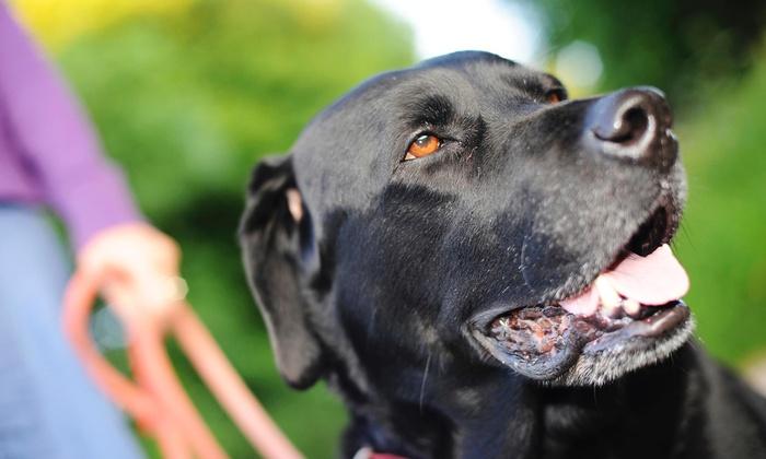 Barks N' Bones Pet Care - Rutherford: Three Days of Pet Boarding at Barks N' Bones (45% Off)