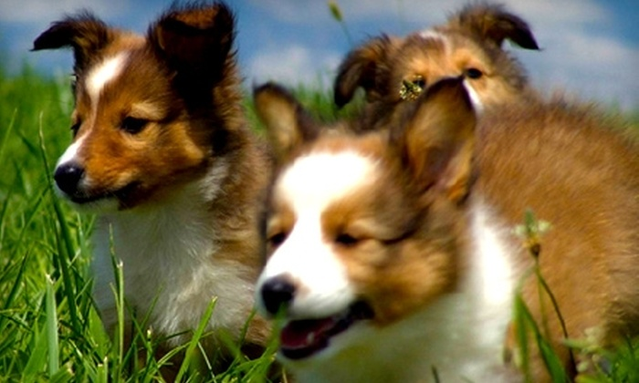 Silver Maple Farm - St Louis: $20 for $50 Worth of Dog or Cat Grooming, Boarding, or Daycare at Silver Maple Farm