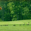 Up to Half Off at Lake Forest Golf Club
