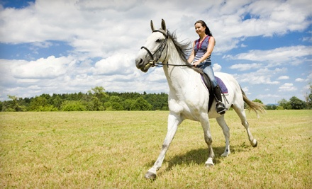 1-Hour Trail Ride or a 30-Minute Riding Lesson and 30-Minute Trail Ride (Up to a $50 value) - Horse Rides of Pensacola in Pensacola