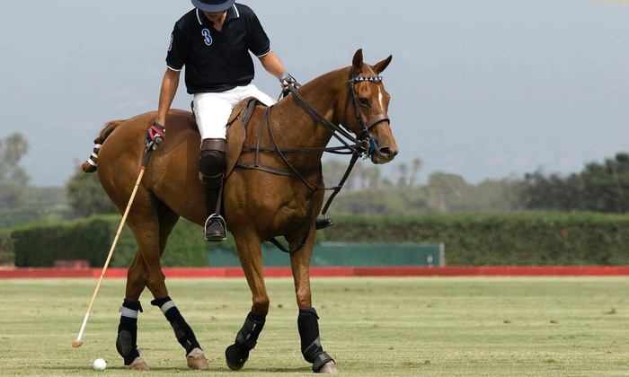 Detroit Polo School - Lyon: One-Day Polo Lesson from Detroit Polo School (50% Off)