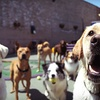 Up to 54% Off Dog Boarding at Pet Care Plus