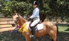 Fieldstone Park Equestrian Facility - Hidden Valley Estates: One, Three, or Five 60-Minute, Group Horseback-Riding Lesson at Fieldstone Park in Mansfield (56% Off)