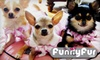 Funny Fur - Eldridge/ West Oaks: $20 for $40 Worth of Pet Merchandise at Funny Fur