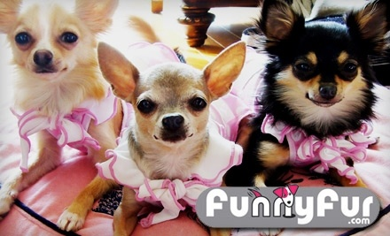 $40 Groupon to Funny Fur - Funny Fur in Houston