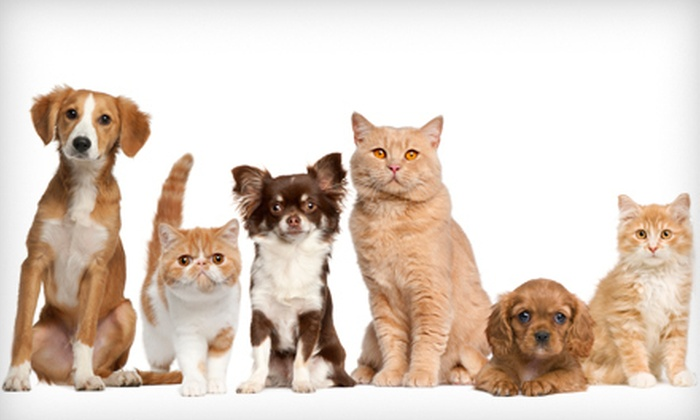 St. Mary's Animal Clinic - Barrio Hollywood: Pet Microchip or Vaccine Series for a Puppy or Kitten at St. Mary's Animal Clinic (Up to 65% Off)