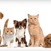Up to 65% Off Pet Microchip or Vaccines