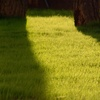 Up to 62% Off from All Seasons Lawn & Landscaping
