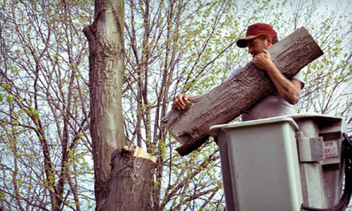 Hayden's Ridge Tree Service - St. Paul: $99 for $250 Worth of Tree Trimming and Removal Services from Hayden's Ridge Tree Service in St. Paul