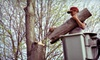 Hayden's Ridge Tree Service: $99 for $250 Worth of Tree Trimming and Removal Services from Hayden's Ridge Tree Service in St. Paul