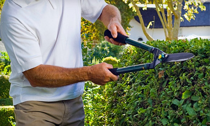 Monster Tree Service - Philadelphia: $99.99 for Three Man-Hours of Tree and Shrub Pruning from Monster Tree Service ($375 Value)