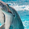 Up to 43% Off Dolphin Snorkeling Tour or Sunset Dolphin Cruise