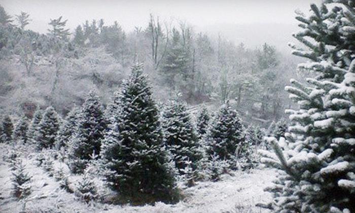 S & C Tree Farm - Molalla: Christmas Tree and Optional Wreath at S & C Tree Farm (Up to 53% Off)