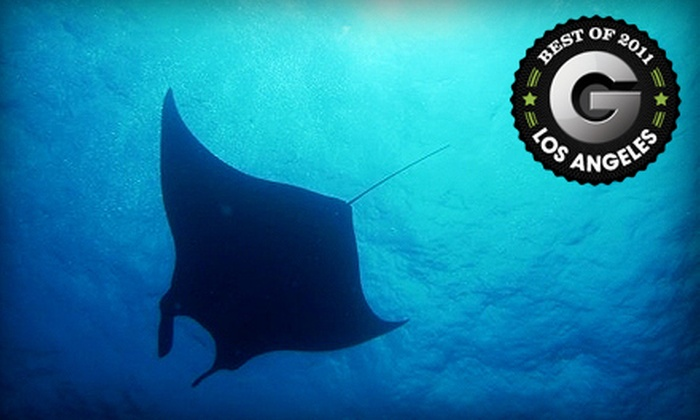 PCH Scuba - Burbank: $399 for a Scuba-Certification Course with Catalina Island Getaway from PCH Scuba in Burbank (Up to $843.10 Value)