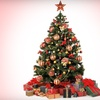 Up to 51% Off Live Christmas Tree in Walnut Creek