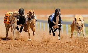 Henlow Racing Limited: Greyhound Racing Night with Meal, Drink, and Racecard for Two, Four or Six at Henlow Greyhound Stadium (Up to 68% Off)