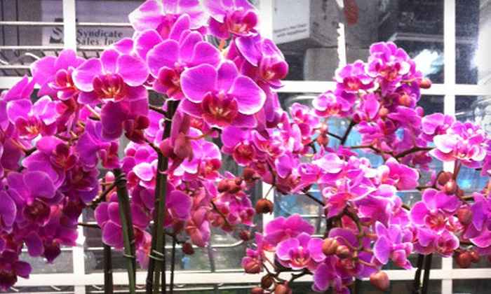 Oakland Flower Market - Old City,Peralta Villa: $20 for $40 Worth of Flowers and Plants at Oakland Flower Market