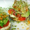 The Manatee Cafe - St. Augustine: $7 for $15 of Breakfast or Lunch Fare at The Manatee Café in St. Augustine