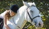 Memento Farm-NEEDS O/S rep - Hammonds Plains: $59 for Four One-on-One Horseback-Riding Lessons at Memento Farm ($140 Value) in Hammond Plains