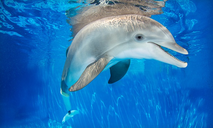Clearwater Marine Aquarium - Clearwater: $42 for Annual Family Membership to the Clearwater Marine Aquarium ($85 Value)
