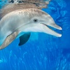 51% Off Membership to Clearwater Marine Aquarium