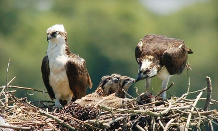 Cape May's Wetlands Wildlife Safari on the Osprey - Cape May: $28 for a Bird-Watching Boat Trip for Two from Cape May's Wetlands Wildlife Safari on the Osprey (Up to $56 Value)