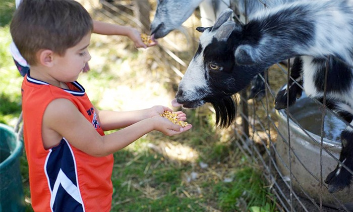 Godsell Farm - Muskego: Admission, Drinks, and Popcorn for Two or Four at Godsell Farm (Up to 36% Off). Three Dates Available.