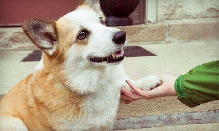 Utopia Animal Care - East Louisville: Dog Boarding or Grooming at Utopia Animal Care in Smithfield (Up to 66% Off). Five Options Available.